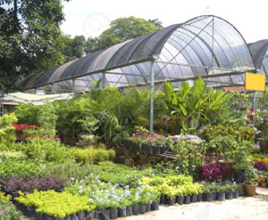 Plant Nursery Malaysia Nursery Plants Make Your Garden Look